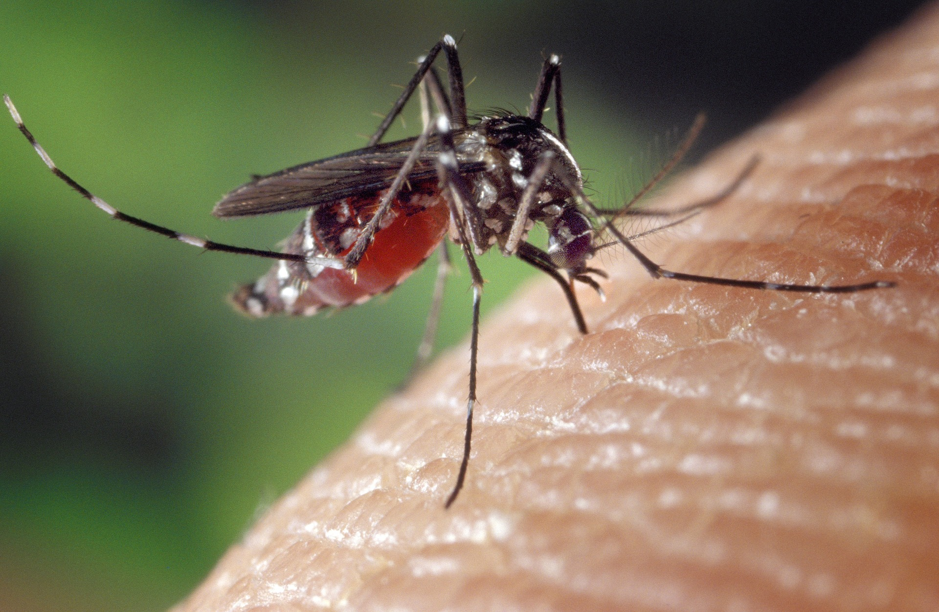 Ways to Prevent Mosquitos off Your Property