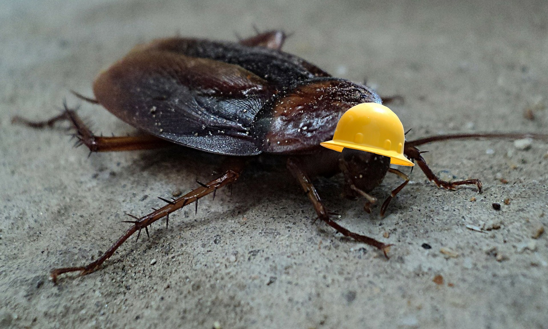 How to Spot a Cockroach Infestation
